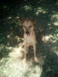 Cachorro macho p doação