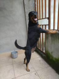 Estou Vendendo uma Fêmea da Raça Rottweiler !!!