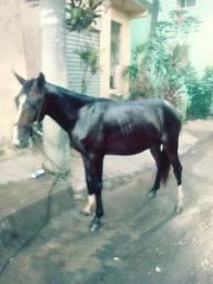 Meu cavalo sumiu foi para lá para o lado de Águas Clara tá na rua do Posto