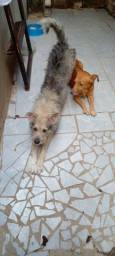 Título do anúncio: Estou doando dois cachorrinho porque estou sencondisons de criar