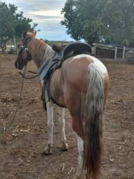Título do anúncio: Cavalo mangalarga manso