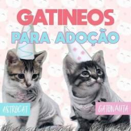 Gatinhos unicórnios para adoção