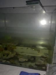 Aquario de peixe