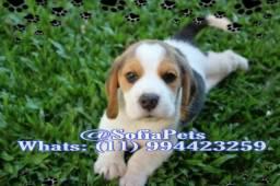 Beagle Macho à sua espera!