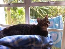 Doação de gata + kit