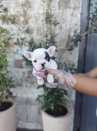Bulldog Francês filhotes nas unidades fisicas hoje