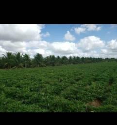 Otima Fazenda com 84 hectares próximo a Vera cruz