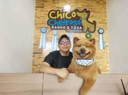 Chocw Chow disponível pra cruzamento.