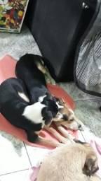 Estou doando dois lindos cachorros,Macho e fêmea!