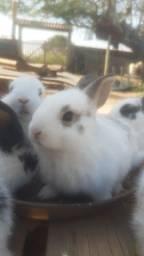 Título do anúncio: Filhotes de coelhos