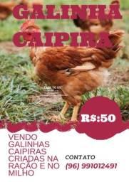Título do anúncio: Galinha Caipira