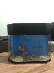 Aquário de peixes 25L