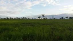 Vendo 90 hectares