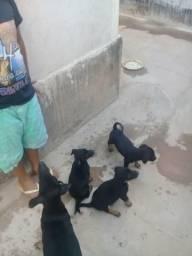 Doa cachorro todos machos 1mes