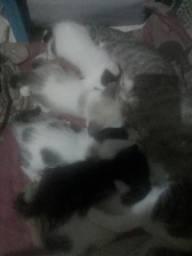 Te desafio a adota se você quiser vocês pode Filhotes de gatos pra adoção