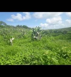 Otima Fazenda com 137 hectares em São Pedro do Potengi