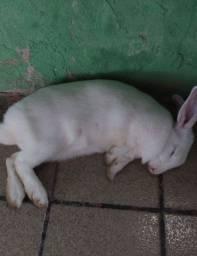 Estou vendendo esse coelho