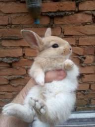 Coelhinhos lindos(coelhos comuns)