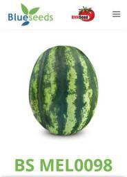 Sementes de melancia importadas dos Estados Unidos