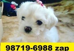 Canil Cães Filhotes BH Maltês Beagle Poodle Yorkshire Lhasa Shihtzu Pug