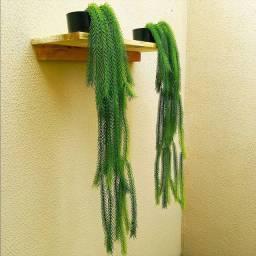 Planta rabo de gato artificial 80cm