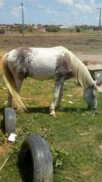 Título do anúncio: Vendo um cavalo marchador