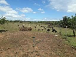 Granja com 9 hectares em extremoz com irrigação