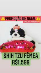 Promoção Top +Belas Shih Tzu fêmea  R$1.599 contrato garantia