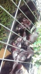Doa-se gatos filhotes.