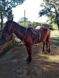Vendo ou troco cavalo corte de milha com manga larga