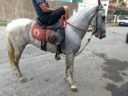 Vendo/troco cavalo