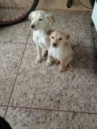 Doa se filhotes de cachorro