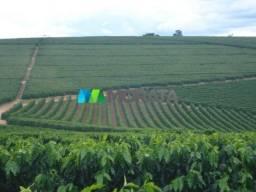 FAZENDA CAFÉ - 176,66 hectares - REGIÃO MACHADO (MG)