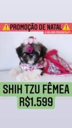 Promoção de Natal! Shih Tzu fêmea lindíssima