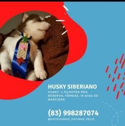 HUSKY SIBERINOS - FILHOTES