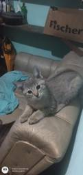 Título do anúncio: Doação de Lindos filhotes de gato!!!