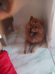 Cachorra