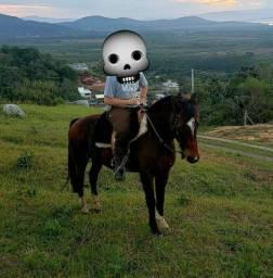 Cavalo Criolo Laçador