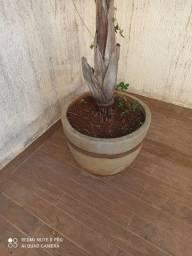Vaso com palmeira para jardim
