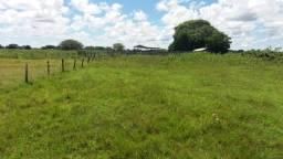 Fazenda em Poconé 2.426 hectares