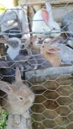 Título do anúncio: vendo coelhos