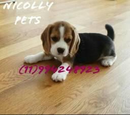 Fofuras de Beagle macho