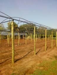 Estufa para plantação