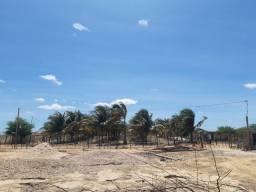 Arrendo Fazenda Coqueiros Rio São Francisco