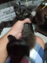 Lindos gatinhos para doacao