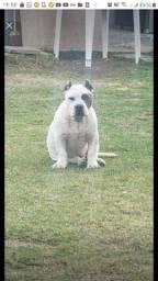 Dog roubado mim ajudem a encontrar