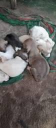 Doace cachorrinhos
