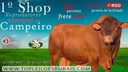 [762EG] Shopping Online Genética Senepol PO Touros por $7 mil em 30 vezes