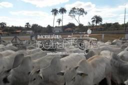 Fazenda 415 Hectares Pecuaria Confinamento e Pivo