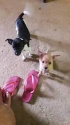 Vendo duas cachorrinhas pencher. *- *